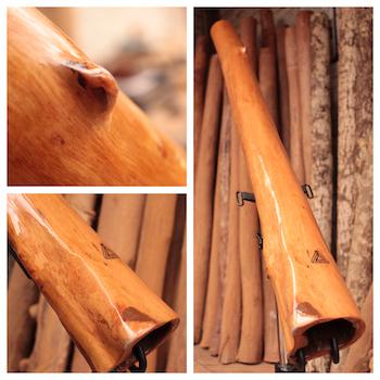 catégorie didgeridoo eucalyptus